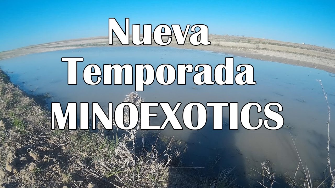 Minoexotics Nueva Temporada 2017