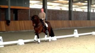 Grand prix horse for sale Dumont 1 dressage
