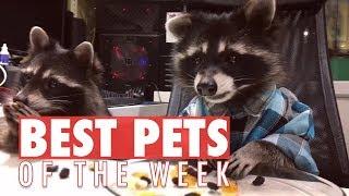 Best Pets of the Week | September 2017 Week 4