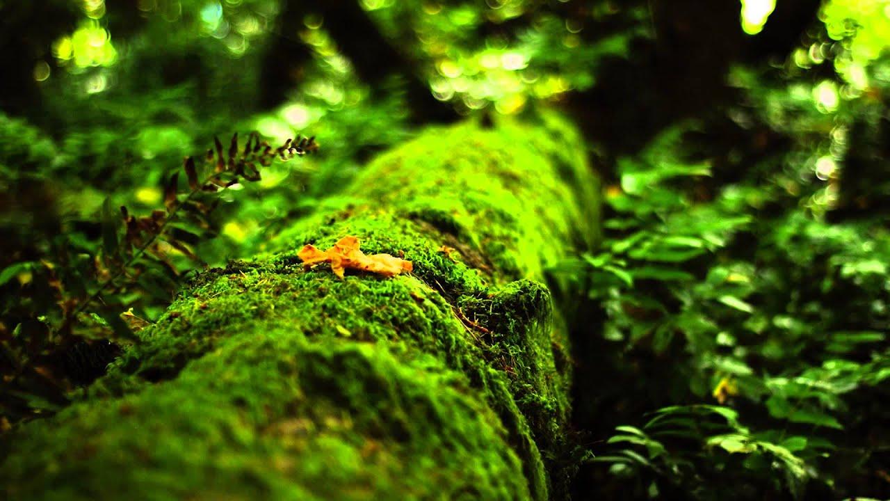 Download Gaia Healing Earth's Frequency 7.83hz Music (Schumann Resonance)