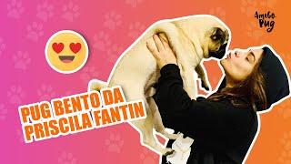 Pug da Priscila Fantin | Amigo Pug