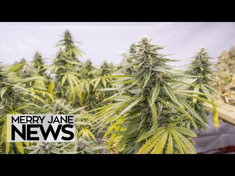 Everything You Need to Know About Illinois' Marijuana Legalization Bill | MERRY JANE News