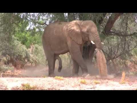 Elephant Hunt, Namibia