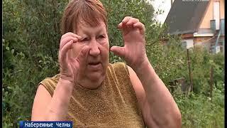 Челнинских дачников терроризируют дикие хомяки