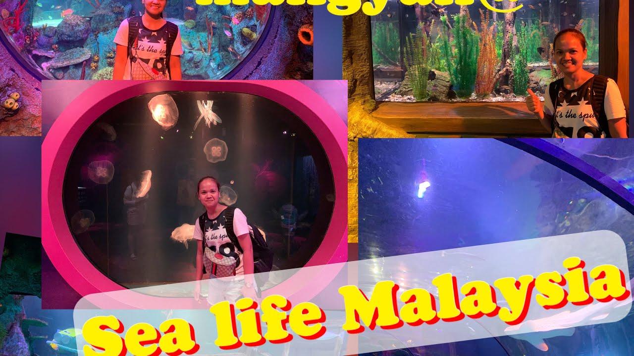 LEGOLAND MALAYSIA SEA LIFE EXPERIENCE /SIMPLING MANGYAN ...