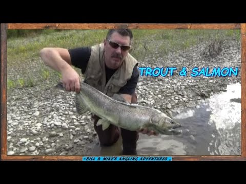 Erie Tributary Steelhead , Rare King & Pink Salmon Fall 2016