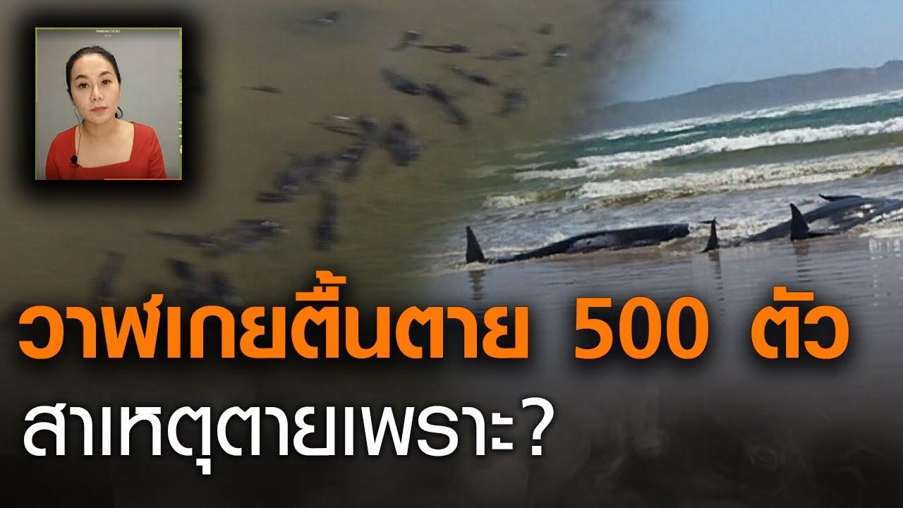 สันนิษฐาน เหตุวาฬเกยตื้น เกือบ 500 ตัว ที่ออสเตรเลีย l TrueVROOM l TNNข่าวเที่ยง l 24-9-63
