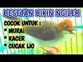 Yuhina Kalimantan Masteran Murai Batu Suara Kasar Yuhina  Mp3 - Mp4 Download