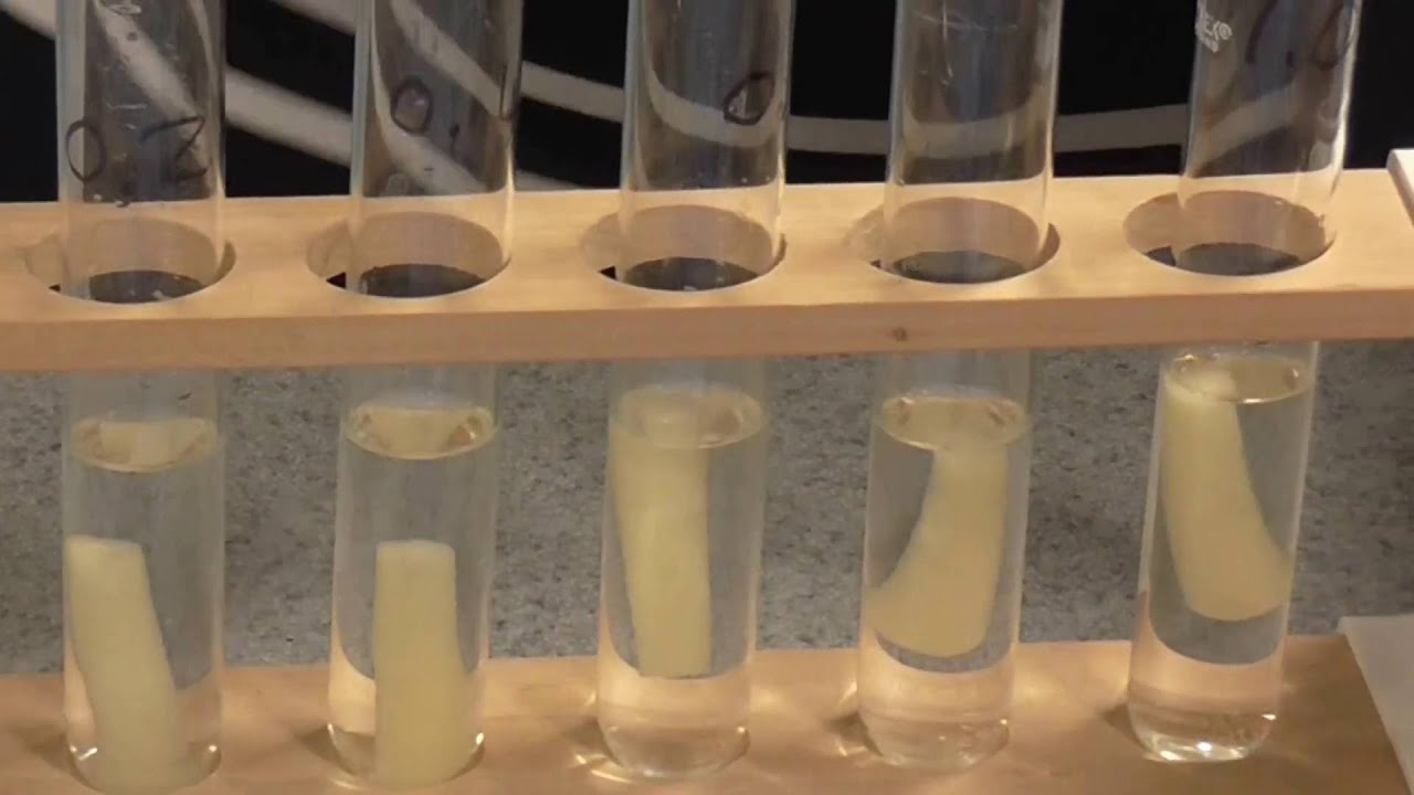 osmosis experiment Diffusion- spontaneous movement of particles from an area of high concentration to an area of low concentration experiment determine the movement of molecules when a.