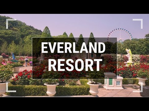 EVERLAND RESORT | KOREAN DISNEYLAND? | IMPRESSIVE BEARS