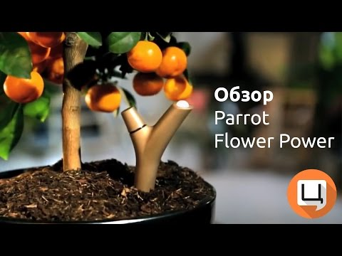 Обзор Parrot Flower Power. Гаджетариум, выпуск 51