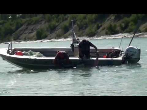 Alaska Fish And Game