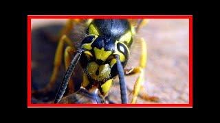 L'astuce de Grand-Mère pour Calmer une Piqûre d'Insecte