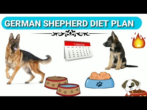 German Shepherd Diet Plan | In Hindi | German shepherd chart