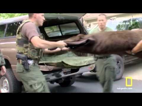 Wild Justice ~ Felony Friday - Undercover Bear Sale