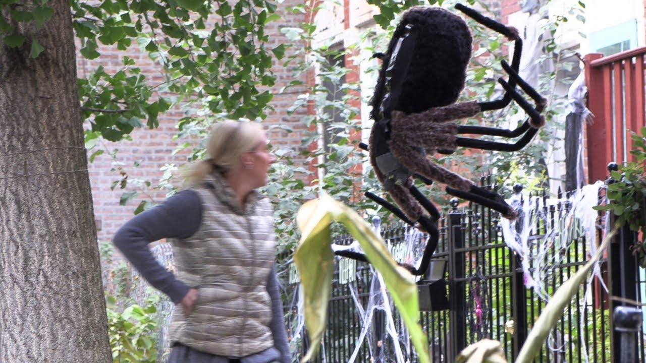 Giant RC Spider Dropping From A Tree - Episode Preview 4K