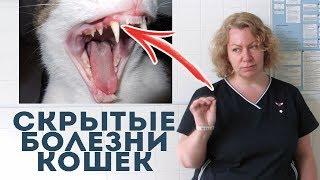 Вы уверены, что ваша кошка здорова? Советы ветеринара.