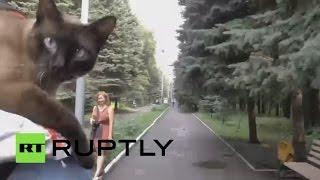 Кот из Ульяновска стал членом велоклуба(Кот из Ульяновска по кличке Семен Семеныч катается на велосипеде вместе со своим владельцем, велогонщиком..., 2016-07-25T18:01:41.000Z)