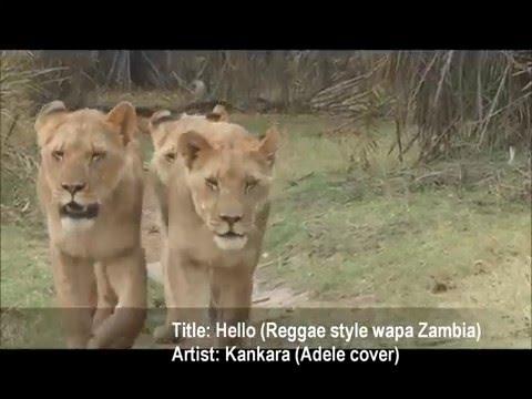Hello (Reggae style wapa Zambia) — by Kankara (Adele cover) — NEW ZAMBIAN MUSIC 2016