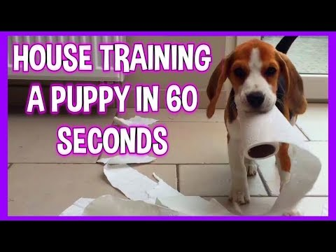 how to keep your puppy from peeing in the house