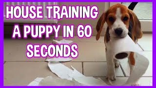 POTTY TRAIN YOUR PUPPY , Explained in 60 seconds!!!