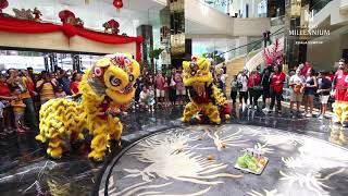 Chinese New Year 2019, Lion Dance