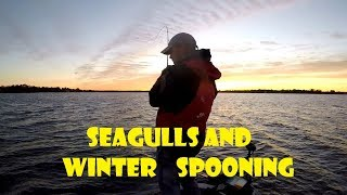 Reading Seagulls for finding bait-fish for winter time Bass fishing!!!