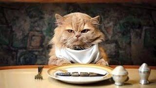 Кошки едят!Ну Очень Смешные звуки издают!Не пропустите!