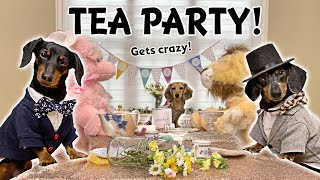 Ep#14: Daphne Hosts a (CRAZY) Tea Party -  with Crusoe & Oakley!