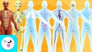 Los sistemas del cuerpo humano para niños - Recopilación