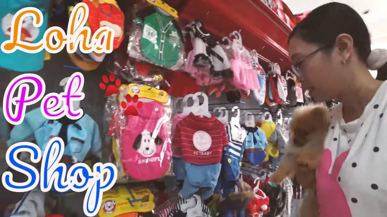Dắt chó phốc sóc mini đi lựa quần áo, phụ kiện ở LoHa Pet Shop