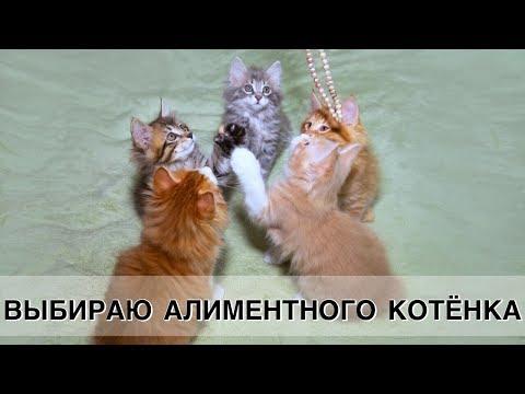 Котятам 1 месяц. Выбираю алиментного котёнка! :)