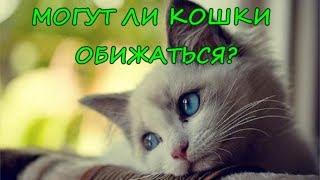 МОГУТ ЛИ КОШКИ ОБИЖАТЬСЯ?  Что чувствуют кошки к хозяину?   CAN CATS BE OFFENDED?