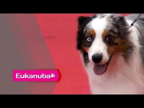 World Dog Show 2013 - European Qualifying