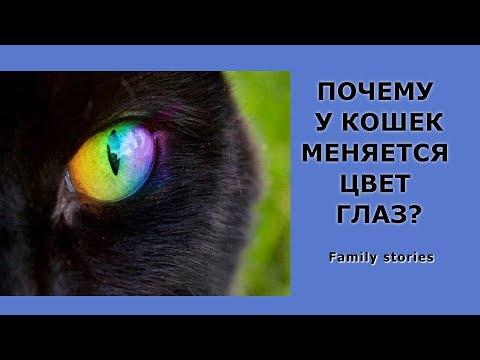 Цвет глаз у британских кошек