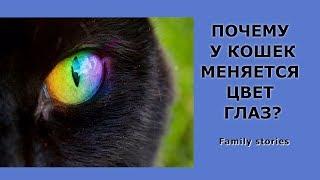 Почему у котят меняется цвет глаз?