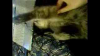 Видео кота который лежит нешевелясь как будто умер