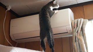 エアコンの埃をチェックする猫 thumbnail