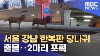 서울 강남 한복판 당나귀 출몰‥2마리 포획 (2021.…