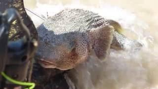 Ядовитая рыба Фугу !Пхукет !Чувак поймал огромную рыбу