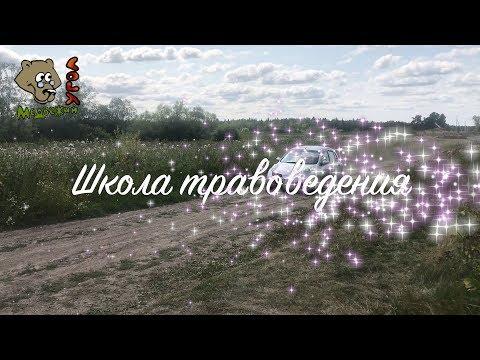 ДЕРМАТИТ - лечим травами (Школа травоведения)