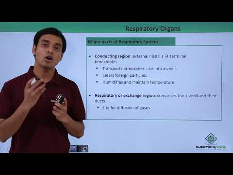 Respiratory System - Respiratory Organs