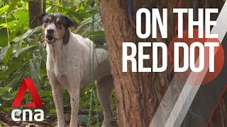 CNA | On The Red Dot | S8 E32: Our lives with dogs - Singapore's street dogs