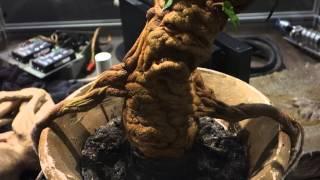 Harry Potter Studio Tour - Animatronic Mandrake Root