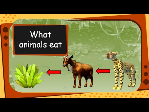 Science - What Animals Eat  - Plant, Flesh Or Both (For Children) -   English