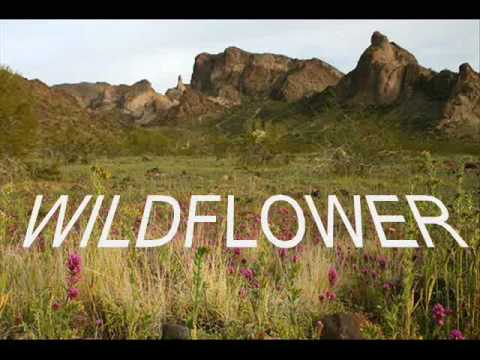 WILDFLOWER by Skylark - cover