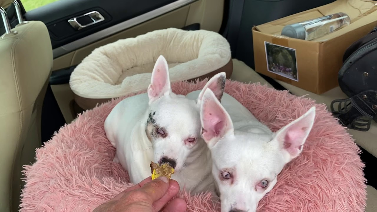 Good news for these two, chi chi and Ponie girl