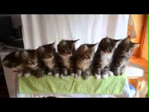 Katzen Lieder