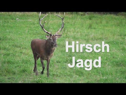 BRUNFT- Hirschjagd Mit Waidmannsheil