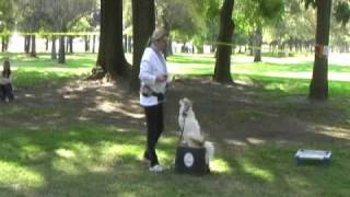 Sit Means Sit Dog Training Seminar Los Angeles